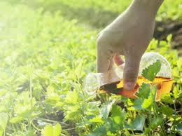 Surfaktan Pertanian Market