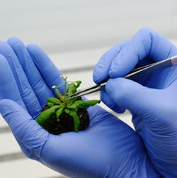 Reagen Bioteknologi Market