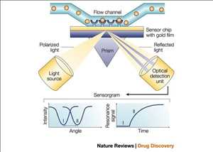 Resonancia de plasma de superficie (SPR) Mercado