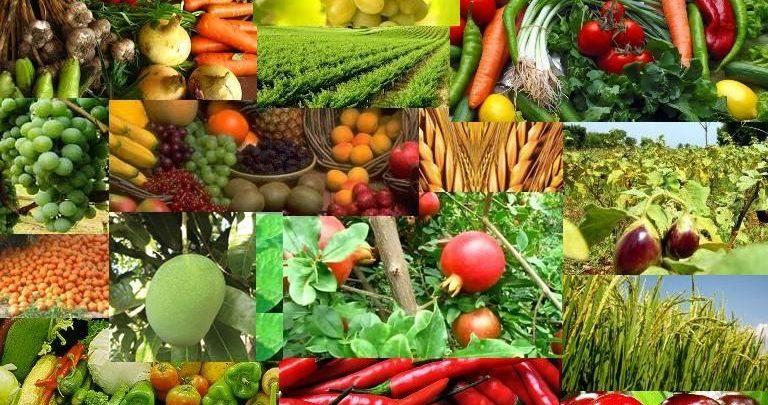 Comercio electrónico de productos agrícolas Mercado