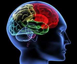 <abarcan clase = 'notranslate'> Neurodiagnóstico </span> Mercado