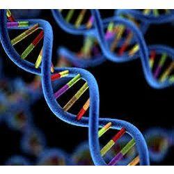 Mercado global de amplificación del genoma completo